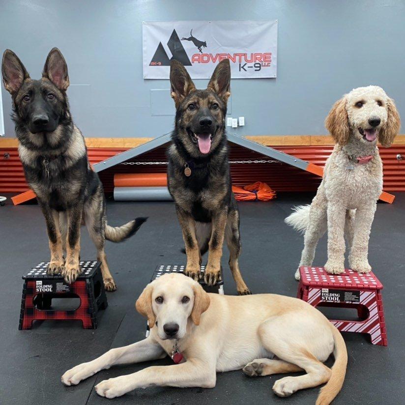Dog Training Boise - Adventure K-9 Canine K9 Nampa Eagle Meridian