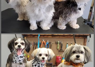 Dog Grooming Boise Idaho - AK9 Adventure K-9