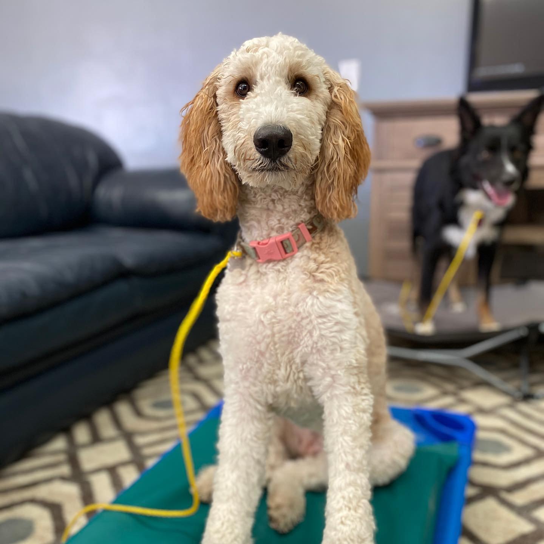 Adventure K-9 Boise Idaho Dog Training Consultation