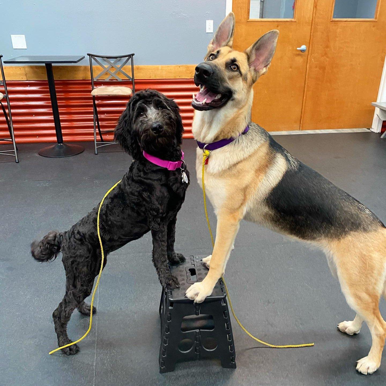 Group Lessons Dog Training Boise Idaho
