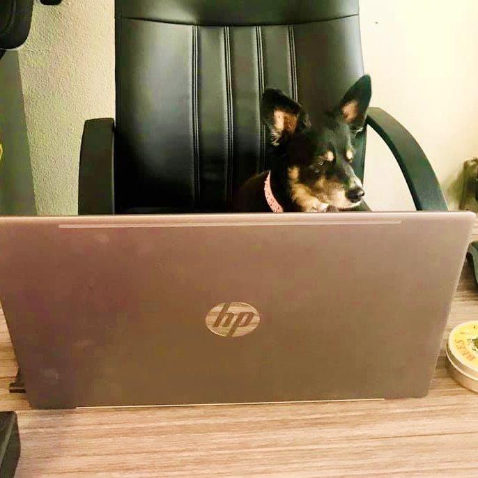 Virtual Dog Training Boise Idaho