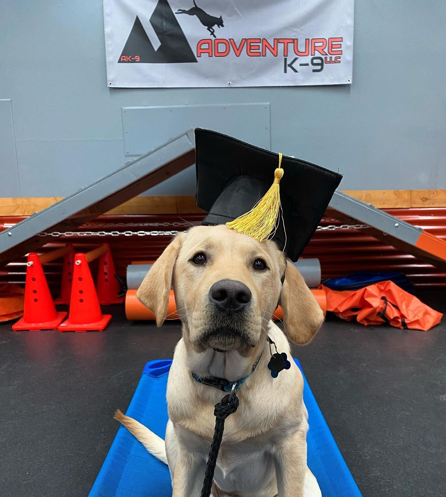 Master Dog Adventure K-9 Dog Training Boise Idaho